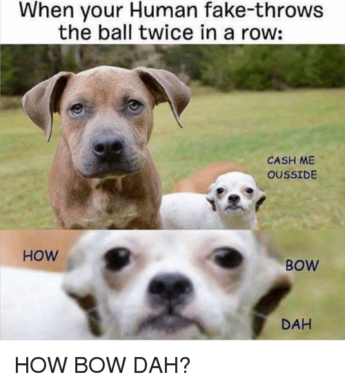 Throwes: When your Human fake-throws  the ball twice in a row:  CASH ME  OUSSIDE  HOW  BOW  DAH HOW BOW DAH?