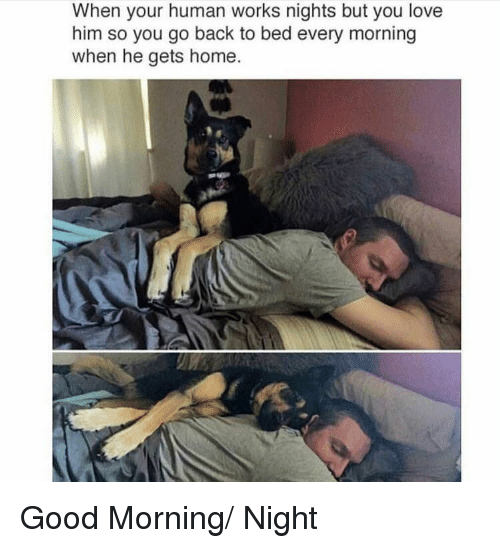Love, Good Morning, and Good: When your human works nights but you love  him so you go back to bed every morning  when he gets home. Good Morning/ Night