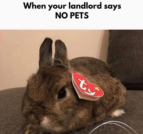 Memes, Pets, and 🤖: When your landlord says  NO PETS
