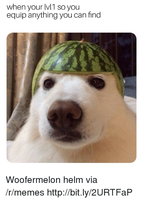 Memes, Http, and Can: when your lv1 so you  equip anything you can find  2  0  2 Woofermelon helm via /r/memes http://bit.ly/2URTFaP