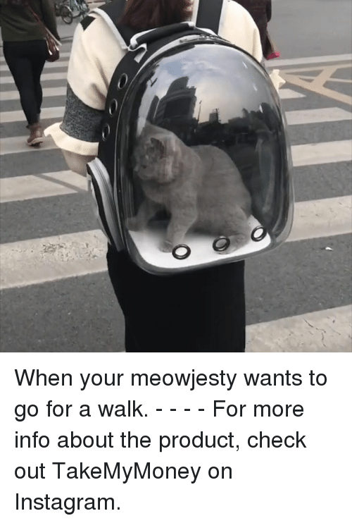 Dank, Instagram, and 🤖: When your meowjesty wants to go for a walk. - - - - For more info about the product, check out TakeMyMoney on Instagram.