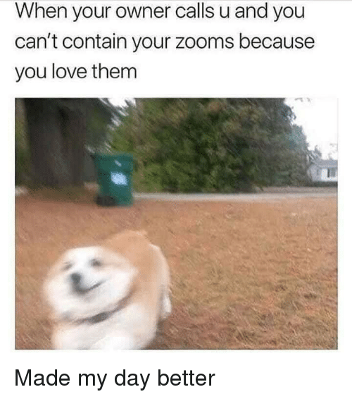Love, Day, and Them: When your owner calls u and you  can't contain your zooms because  you love them Made my day better