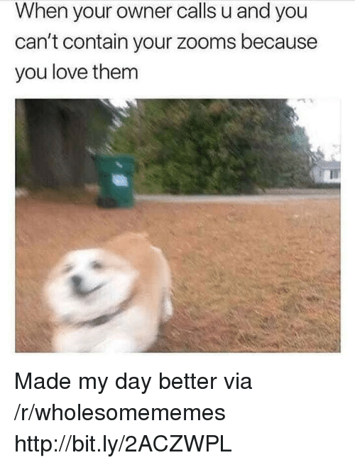 Love, Http, and Via: When your owner calls u and you  can't contain your zooms because  you love them Made my day better via /r/wholesomememes http://bit.ly/2ACZWPL