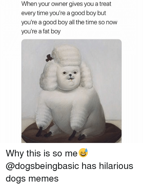 Dogs, Funny, and Memes: When your owner gives you a treat  every time you're a good boy but  you're a good boy all the time so now  you're a fat boy Why this is so me😅 @dogsbeingbasic has hilarious dogs memes