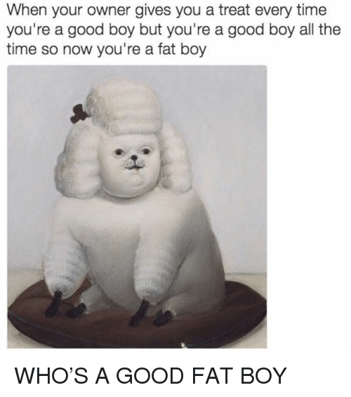 Funny, Good, and Time: When your owner gives you a treat every time  you're a good boy but you're a good boy all the  time so now you're a fat boy WHO'S A GOOD FAT BOY