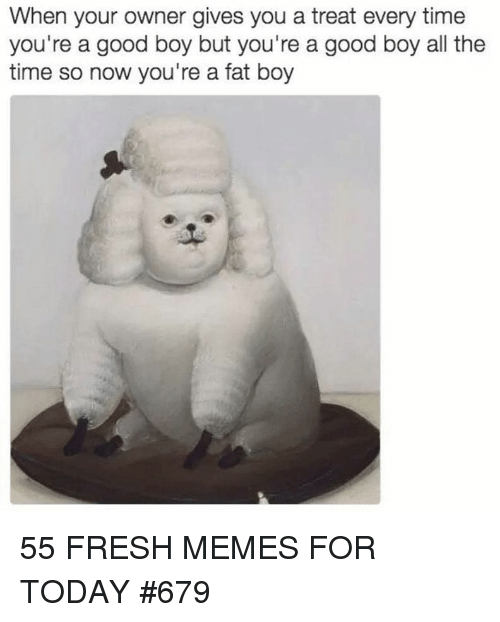 Fresh, Memes, and Good: When your owner gives you a treat every time  you're a good boy but you're a good boy all the  time so now you're a fat boy 55 FRESH MEMES FOR TODAY #679