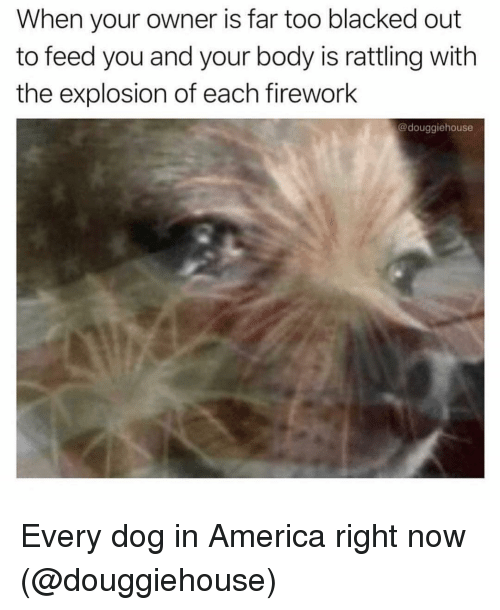America, Memes, and Blacked: When your owner is far too blacked out  to feed you and your body is rattling with  the explosion of each firework  @douggiehouse Every dog in America right now (@douggiehouse)
