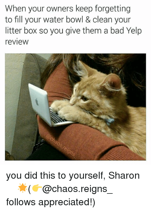 litter box: When your owners keep forgetting  to fill your water bowl & clean your  litter box so you give them a bad Yelp  review you did this to yourself, Sharon ☆☆☆☆🌟(👉@chaos.reigns_ follows appreciated!)