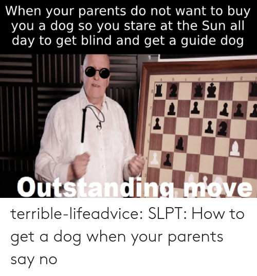 When Your Parents: When your parents do not want to buy  you a dog so you stare at the Sun all  day to get blind and get a guide dog  veTTeroP  Outstanding move terrible-lifeadvice:  SLPT: How to get a dog when your parents say no