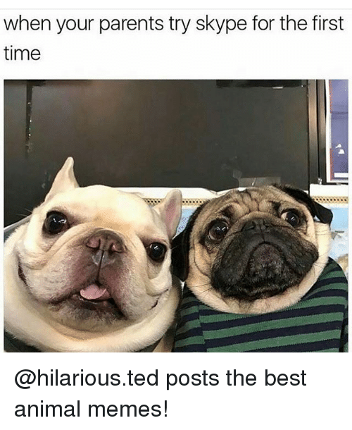 Animals Meme: when your parents try skype for the first  time @hilarious.ted posts the best animal memes!