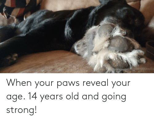 Paws: When your paws reveal your age. 14 years old and going strong!