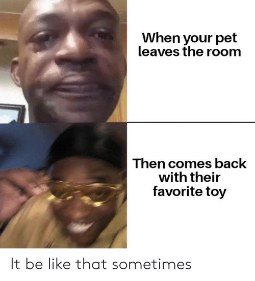 the room: When your pet  leaves the room  Then comes back  with their  favorite toy It be like that sometimes