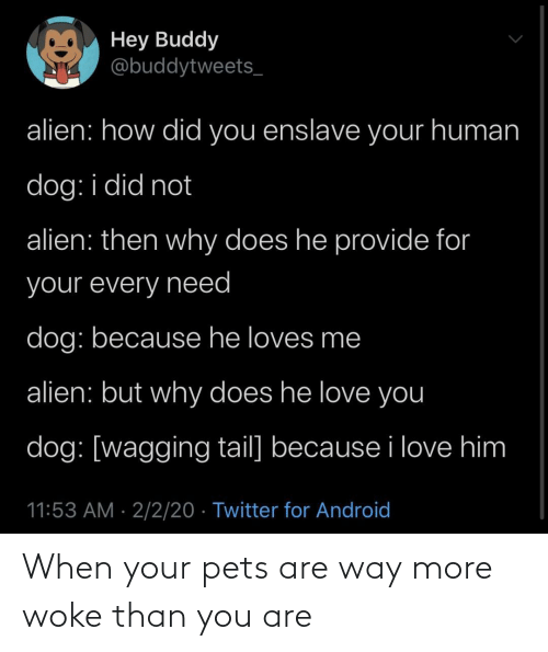 You Are: When your pets are way more woke than you are