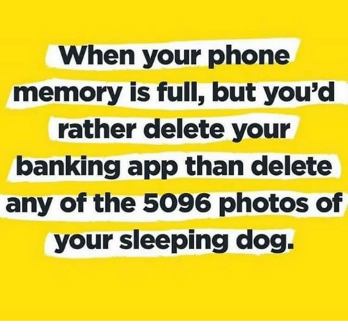 Memes, Phone, and Sleeping: When your phone  memory is full, but you'd  rather delete your  banking app than delete  any of the 5096 photos of  your sleeping dog.