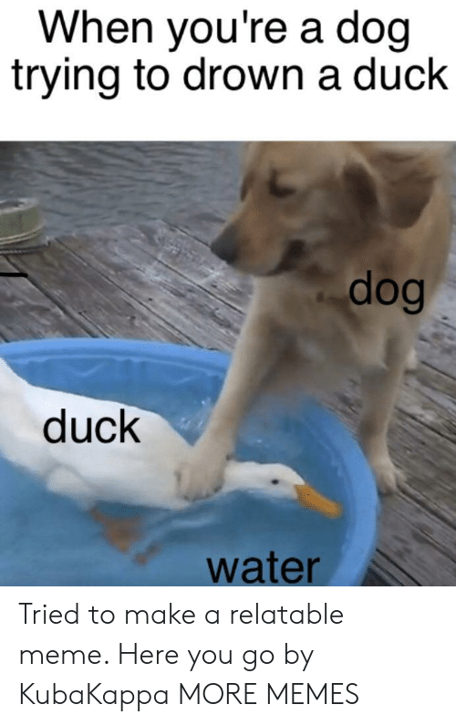 Dank, Meme, and Memes: When you're a doq  trying to drown a duck  dog  duck  water Tried to make a relatable meme. Here you go by KubaKappa MORE MEMES