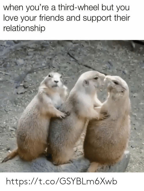 Friends, Love, and Memes: when you're a third-wheel but you  love your friends and support their  relationship https://t.co/GSYBLm6Xwb
