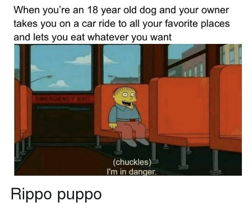 Old, Dog, and Car: When you're an 18 year old dog and your owner  takes you on a car ride to all your favorite place:s  and lets you eat whatever you want  (chuckles)  I'm in danger. Rippo puppo