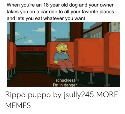 Dank, Memes, and Target: When you're an 18 year old dog and your owner  takes you on a car ride to all your favorite place:s  and lets you eat whatever you want  (chuckles)  I'm in danger. Rippo puppo by jsully245 MORE MEMES
