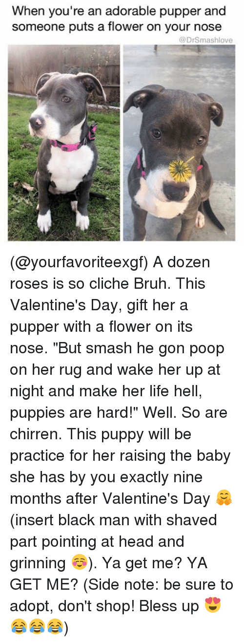"""Valentine Day Gift: When you're an adorable pupper and  someone puts a flower on your nose  (a DrSmashlove (@yourfavoriteexgf) A dozen roses is so cliche Bruh. This Valentine's Day, gift her a pupper with a flower on its nose. """"But smash he gon poop on her rug and wake her up at night and make her life hell, puppies are hard!"""" Well. So are chirren. This puppy will be practice for her raising the baby she has by you exactly nine months after Valentine's Day 🤗 (insert black man with shaved part pointing at head and grinning ☺️). Ya get me? YA GET ME? (Side note: be sure to adopt, don't shop! Bless up 😍😂😂😂)"""