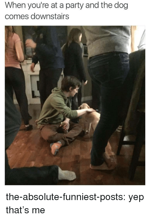 When Youre At A Party: When you're at a party and the dog  comes downstairs the-absolute-funniest-posts: yep that's me