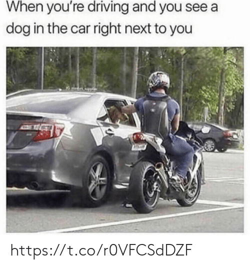 Driving, Memes, and 🤖: When you're driving and you see a  dog in the car right next to you https://t.co/r0VFCSdDZF