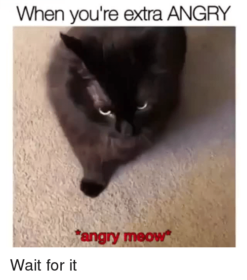 Angry, Extra, and For: When you're extra ANGRY  angry meow Wait for it