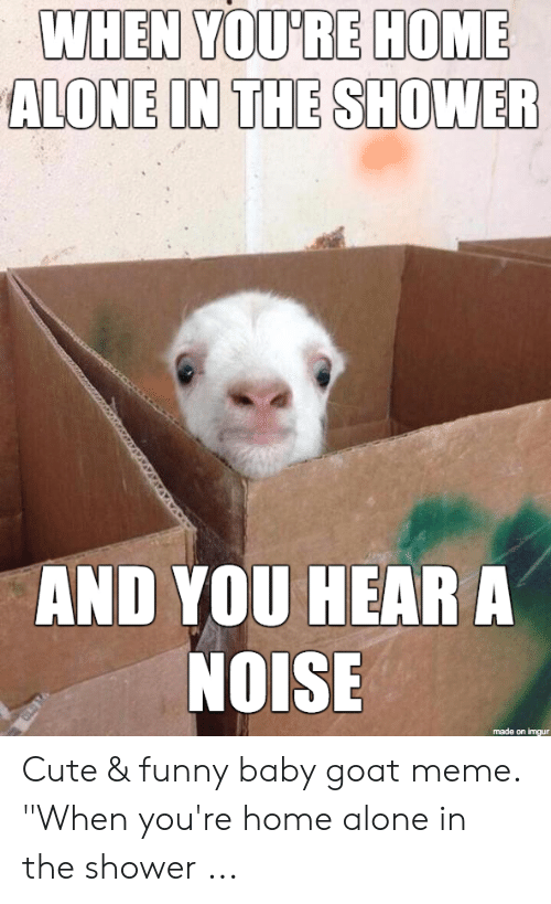 25 Best Memes About Funny Baby Goats Funny Baby Goats Memes