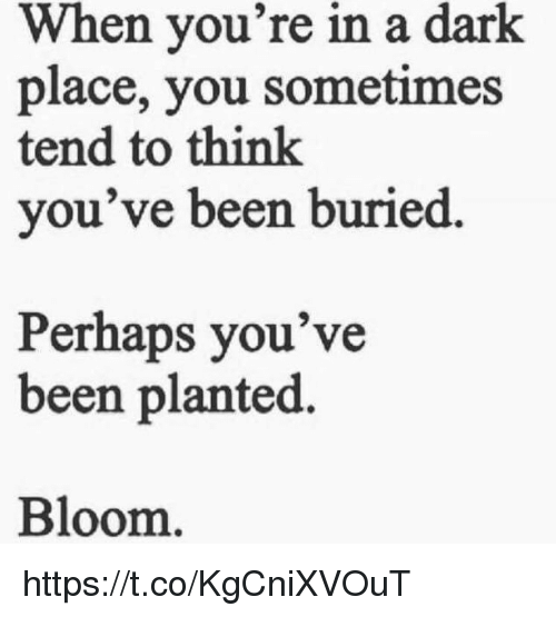 Memes, Been, and 🤖: When you're in a dark  place, you sometimes  tend to think  you've been buried  Perhaps you've  been planted.  Bloom https://t.co/KgCniXVOuT