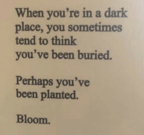 buried: When you're ina dark  place, you sometimes  tend to think  you've been buried.  Perhaps you've  been planted.  Bloom.