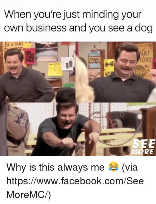 Facebook, Memes, and Business: When you're just minding your  own business and you see a dog  ART  SEE Why is this always me 😂  (via https://www.facebook.com/SeeMoreMC/)