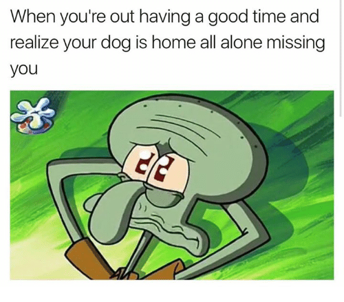 Being Alone, Relationships, and Good: When you're out having a good time and  realize your dog is home all alone missing  you
