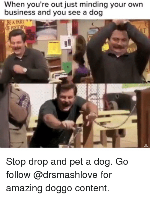 Memes, Business, and Amazing: When you're out just minding your own  business and you see a dog  EA ART Stop drop and pet a dog. Go follow @drsmashlove for amazing doggo content.