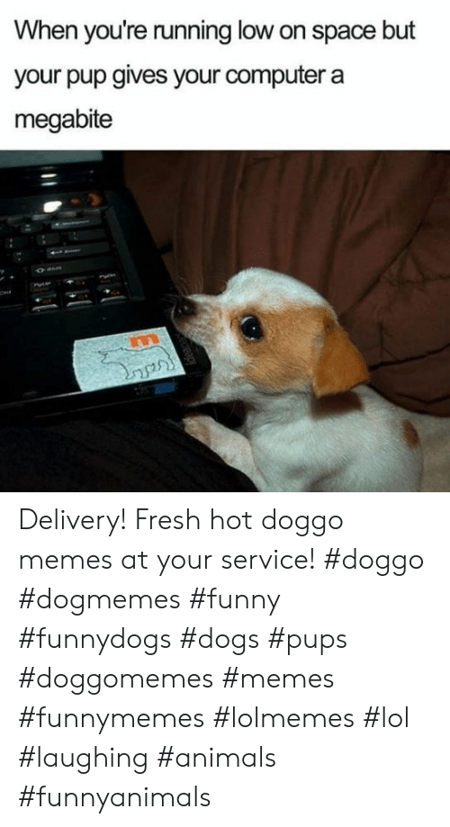Doggo Memes: When you're running low on space but  your pup gives your computer a  megabite  Cert Delivery! Fresh hot doggo memes at your service! #doggo #dogmemes #funny #funnydogs #dogs #pups #doggomemes #memes #funnymemes #lolmemes #lol #laughing #animals #funnyanimals