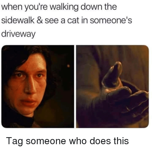 Memes, Tag Someone, and 🤖: when you're walking down the  sidewalk & see a cat in someone's  driveway Tag someone who does this
