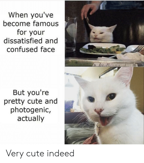 youre pretty: When you've  become famous  for your  dissatisfied and  confused face  But you're  pretty cute and  photogenic,  actually Very cute indeed