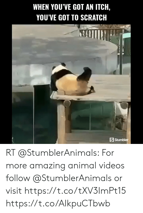 Animal Videos: WHEN YOU'VE GOT AN ITCH,  YOU'VE GOT TO SCRATCH  S Stumbler RT @StumblerAnimals: For more amazing animal videos follow @StumblerAnimals or visit https://t.co/tXV3ImPt15 https://t.co/AIkpuCTbwb