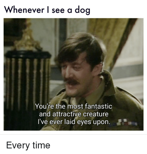 Time, Creature, and Dog: Whenever l see a dog  You're the most fantastic  and attractive creature  I've ever laid eyes upon. Every time