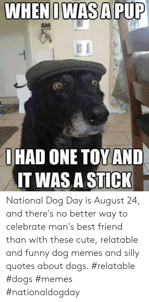 Best Friend, Cute, and Dogs: WHENIWAS A PUP  RAD  O HAD ONE TOY AND  IT WAS A STICK  T National Dog Day is August 24, and there's no better way to celebrate man's best friend than with these cute, relatable and funny dog memes and silly quotes about dogs.  #relatable #dogs #memes #nationaldogday