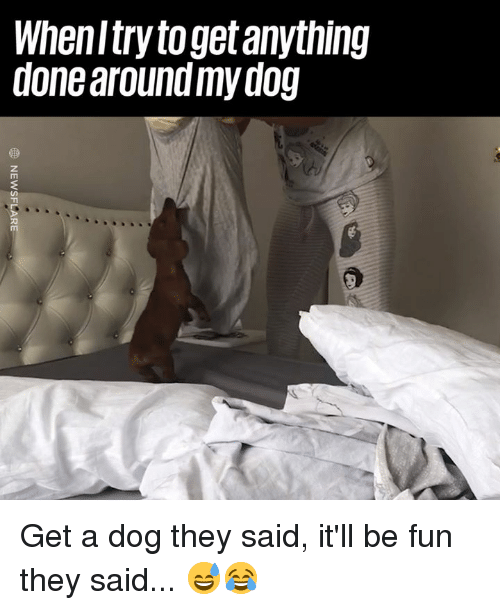 Dank, 🤖, and Dog: Whenltry to get anything  done around my dog Get a dog they said, it'll be fun they said... 😅😂