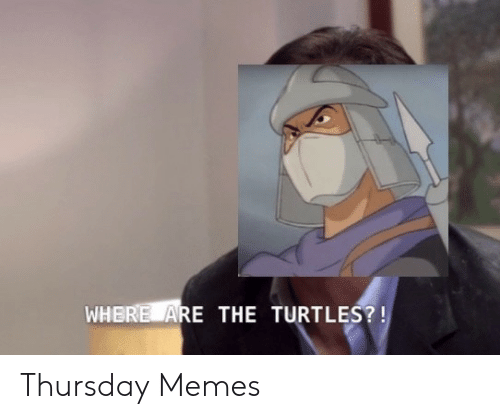 turtles: WHERE ARE THE TURTLES?! Thursday Memes