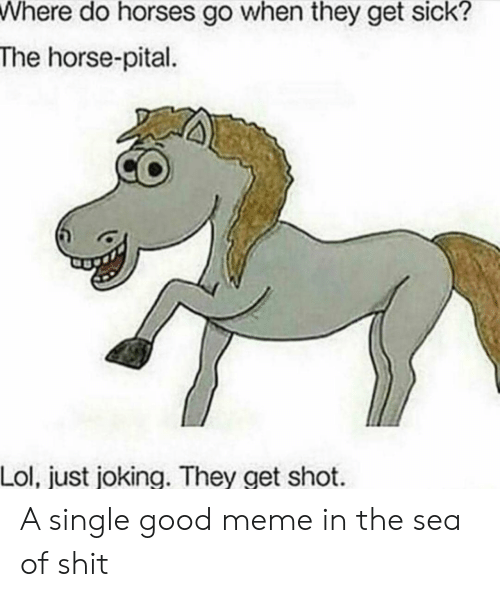 Good Meme: Where do horses go when they get sick?  The horse-pital  Lol, just joking. They get shot A single good meme in the sea of shit