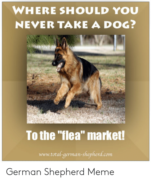 "Meme, German Shepherd, and Never: WHERE SHOULD YOU  NEVER TAKE A DOG?  To the ""flea"" market!  www.total-german-shepherd.com German Shepherd Meme"