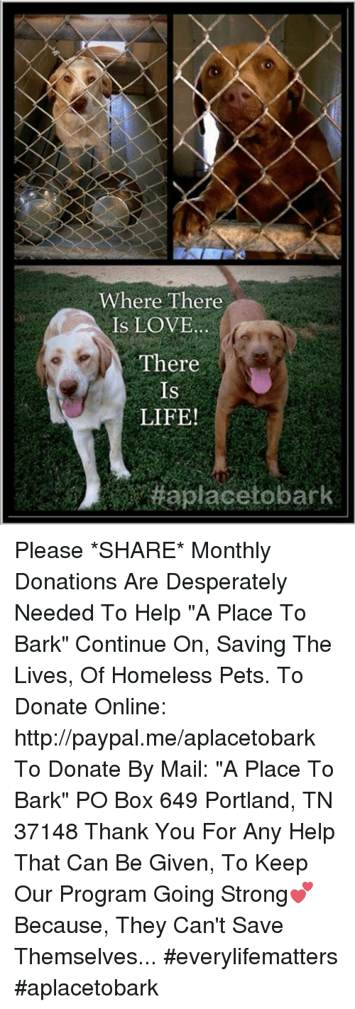 "Boxing, Desperate, and Homeless: Where There  IS LOVE  There  IS  LIFE! Please *SHARE* Monthly Donations Are Desperately Needed To Help ""A Place To Bark"" Continue On, Saving The Lives, Of Homeless Pets.   To Donate Online: http://paypal.me/aplacetobark  To Donate By Mail:  ""A Place To Bark"" PO Box 649 Portland, TN 37148  Thank You For Any Help That Can Be Given, To Keep Our Program Going Strong💕 Because, They Can't Save Themselves... #everylifematters #aplacetobark"