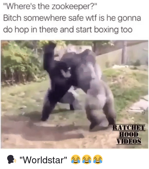 """Bitch, Boxing, and Memes: """"Where's the zookeeper?""""  Bitch somewhere safe wtf is he gonna  do hop in there and start boxing too  RATCIET  HOOD  VIDEOS 🗣 """"Worldstar"""" 😂😂😂"""