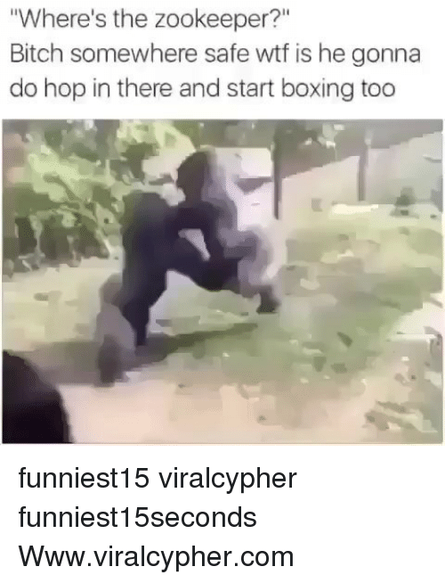 "zookeeper: Where's the zookeeper?""  Bitch somewhere safe wtf is he gonna  do hop in there and start boxing too funniest15 viralcypher funniest15seconds Www.viralcypher.com"