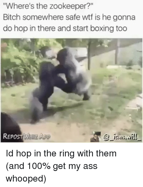 "zookeeper: Where's the zookeeper?""  Bitch somewhere safe wtf is he gonna  do hop in there and start boxing too  @-12su冫..:/İ!! Id hop in the ring with them (and 100% get my ass whooped)"