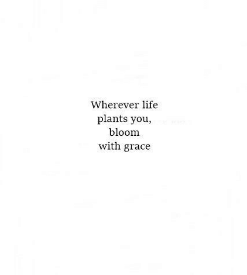 bloom: Wherever life  plants you,  bloom  with grace
