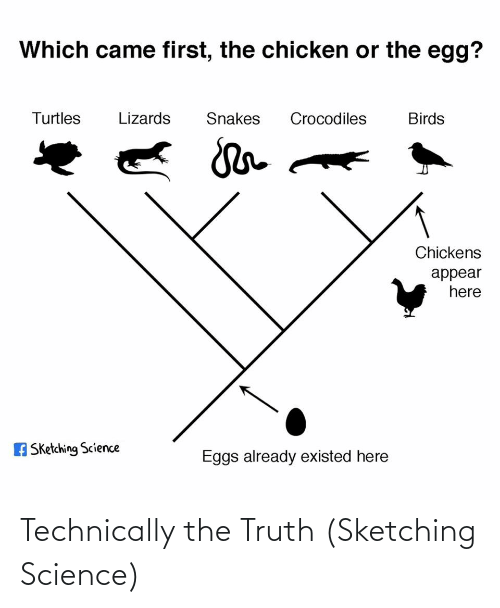 Birds: Which came first, the chicken or the egg?  Turtles  Lizards  Snakes  Crocodiles  Birds  Chickens  appear  here  A Sketching Science  Eggs already existed here Technically the Truth (Sketching Science)