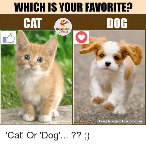 cat-or-dog: WHICH IS YOUR FAVORITE?  CAT  DOG  laughing colours.com 'Cat' Or 'Dog'... ?? ;)