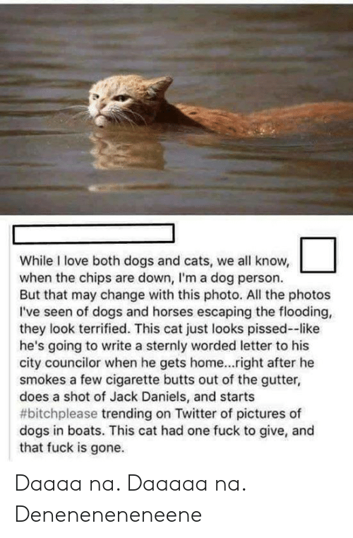 butts: While I love both dogs and cats, we all know,  when the chips are down, I'm a dog person.  But that may change with this photo. All the photos  I've seen of dogs and horses escaping the flooding,  they look terrified. This cat just looks pissed--like  he's going to write a sternly worded letter to his  city councilor when he gets home...right after he  smokes a few cigarette butts out of the gutter,  does a shot of Jack Daniels, and starts  #bitchplease trending on Twitter of pictures of  dogs in boats. This cat had one fuck to give, and  that fuck is gone. Daaaa na. Daaaaa na. Deneneneneneene